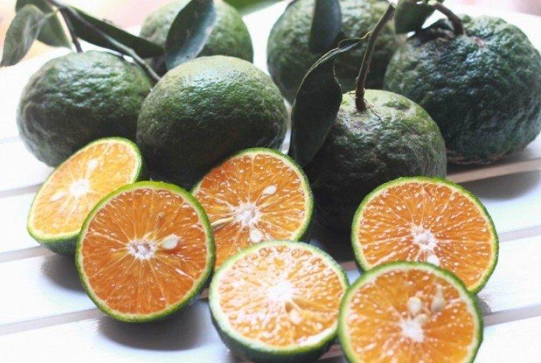 Chống lão hóa cho da bằng trái cây mọng nước